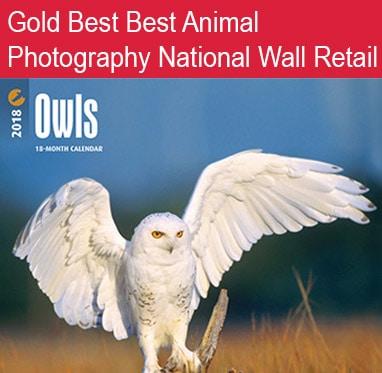 Owls 382 x 373