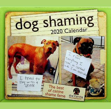 Dog Shaming 382x373